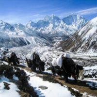 Three Pass Trek Everest Trek